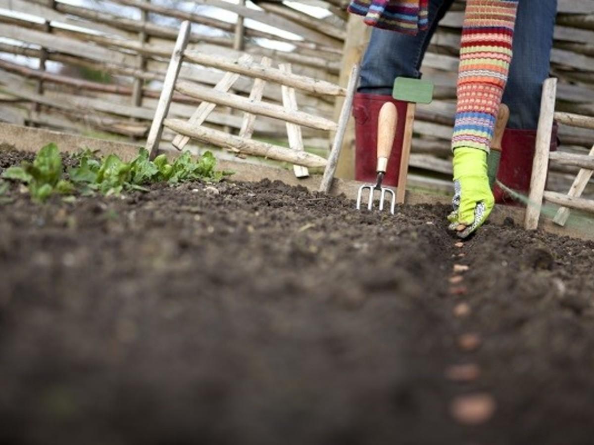 Когда и как сажать укроп семенами в открытый грунт: весной 17